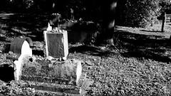 DSCF0338a_jnowak64 (jnowak64) Tags: poland polska malopolska cracow krakow krakoff kazimierz kirkut historia wiosna mik bwextra