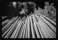 La Palma nature in IR (Dierk Topp) Tags: bw ir sonya7rir voigtlanderheliarhyperwide10mmf56aspherical canaryislands infrared infrarot islascanarias lapalma monochrom sw trees