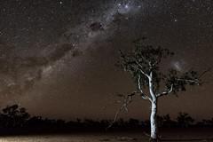 Snow-gum and stars (d_joshua_brunner.) Tags: djoshuabrunner d750 sky starry stars western australia wa westernaustralia onslow pilbara