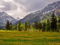 Birgsau as it's best (@DinAFoto) Tags: birgsau stillachtal allgäu alpen alps bäume trees wiese natur landschaft landscape himmel sky wolken clouds berge mountains
