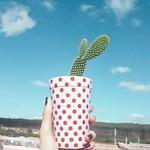 44/100- Bunny Ears Cactus thumbnail
