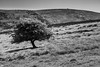 Tree on the Hill (alan.dphotos) Tags: monochrome landscapephotography landscape hill hillside lone tree
