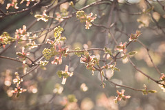 spring on the trees (olgabrezhneva) Tags: spring tree blossom flower flowers bokeh nature colours natur beautiful beauty pretty flora plant outdoor canon 600d bloom micro natural white macro sky bird sundaylights