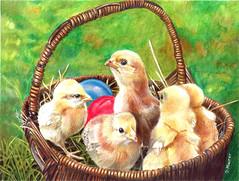 Newborn Chicks (GayleMaurer006) Tags: