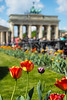Berlin (Lens Daemmi) Tags: brandenburger tor brandenburg gate tulpen tulips