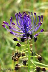 DSC_0051 (eugenio.mandis) Tags: rosso ragni macro fiori colori aracnide ragno ape giallo natura naturalistico naturalistiche spring primavera lilla