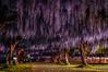 PhoTones Works #10161 (TAKUMA KIMURA) Tags: photones takuma kimura 木村 琢磨 landscape nature flower japan okayama kazu fuji park light up night scene pentax ricoh kp