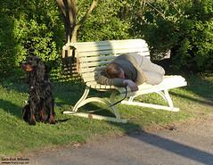 Vila - Rest (larseriksfoto) Tags: vila fs180506 fotosondag fotosöndag lund stadsparken tz90 hund sol rest bench dog park