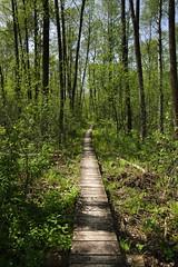 IMGP14146 (Łukasz Z.) Tags: lubelskie rzeczpospolitapolska poleskiparknarodowy nationalpark sigma1750mmf28exdchsm pentaxk3