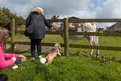 P1250201_edit (The Oldhams) Tags: cornwall donkeys flickadonkeysanctuary