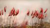 L'Exil...! - Exile ...! (minelflojor) Tags: pousse mousse flou macro bokeh séchée graine shoot foam blur dried seed tamronsp90mmf28dimacro11vcusd