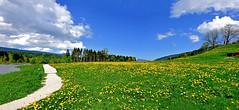 Pointillé de pissenlits. (Diegojack) Tags: lechenit vaud suisse d7200 paysages campagne valléedejoux panorama prés pissenlits chemin assemblage printemps groupenuagesetciel