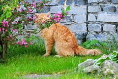 cat (Wajdys) Tags: cat nature photo garden eu europe czech czechia central bohemian region photography photographer invitation amazing zahrada kočka