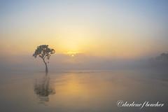 foggy sunrise (amaw) Tags: winner alt