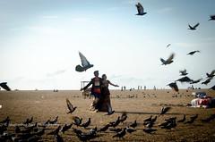Walking with the pigeons (*shutterbug_iyer*) Tags: beach couple walk wedding prewedding album pigeons feedingtime birds sand stride engagement courting wings horizon