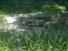 15 -Print Code 00146 (linastern) Tags: japan moscow trees garden lilian water calm tranquility walking air flower spirit zen style green reflaction