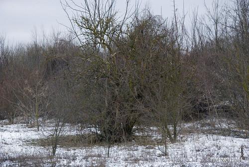 Волинська весна 2018 InterNetri Ukraine 021