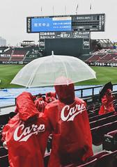 RAIN-OUT 雨天中止 (Sign-Z) Tags: nikon d4s 2470mmf28g hiroshima stadium baseball rain 広島市 広島 マツダスタジアム 野球 雨