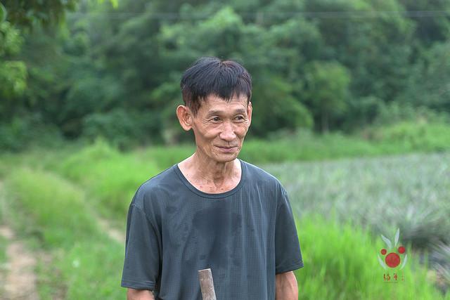 鳳梨、竹筍通通吃酵素長大,無農藥耕種 三竹居士 (8)