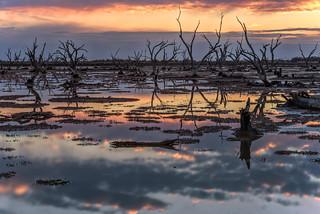 Swamp Town Sunset