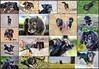 Tina, Tina y más Tina (Totugj) Tags: tina perrita perra mascotas animales animal