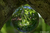 Bluebells in the woods (crezzy1976) Tags: nikon d3300 nikkor55300mm glassball photographyball orb crezzy1976 photographybyneilcresswell cheshire ellesmereport outdoors sunnyday bluebells flowers nature