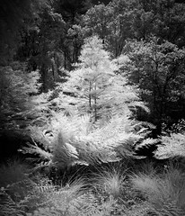ici (phaul2001) Tags: aquitanien bw france frankreich ir blackandwhite infrared infrarot monochrom sw schwarzweiss