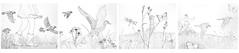 FirstFourMeadowPanels (Alex Hiam) Tags: meadow walk girl running grass flowers birds nature drawing pen ink spring