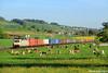 Boîtes à Meuh ! (Lion de Belfort) Tags: train chemin de fer sbb cff ffs traxx bombardier br 186 containers muri argovie suisse vache colza bözberg 906 boswil