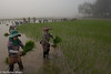 Planting Rice On A Misty Morning (Nick Mayo/RemoteAsiaPhoto) Tags: shanstate burma paddy transplanting shan kalaw