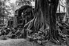 Root and Ruin (Sunyawit Sethapokin) Tags: angkorwat siemreap