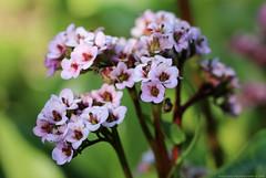 Spring Flowers (Rick & Bart) Tags: flower bloem nature blossom flora lente spring rickvink rickbart canon eos70d macro