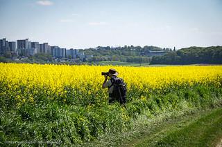 Photograph beim Rapsblüten photographieren - Photographer photographing rape flowers