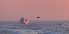 Noordpier sunset (tribsa2) Tags: nederlandvandaag sunrisesunset sunset seaside sky shoreline sea ship schip nederland netherlands noordpier