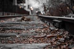 The path forward isn't always clear (s.braunstein1120) Tags: traintracks tracks train leafs autumn depthoffield bokeh sigma175028 sigma nikon nikond7000 d7000 f35 shallowdof dof newhope lambertville pa nj