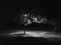 at night in the park - Nachts im Park (ralfkai41) Tags: nacht night bw lampe baum monochrom nightshot blackwhite schwarzweis sw nachtfotografie outdoor tree park lichter light
