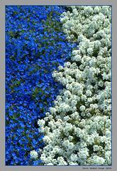 Euroflora - 28 (cienne45) Tags: euroflora euroflora2018 flaralies internationalflowershows parksofnervi nervi genova genoa genovanervi fiori flowers carlonatale cienne45 natale exhibition floralie italy