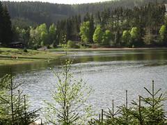 IMG_8998 (germancute) Tags: outdoor nature lütsche stausee wald thuringia thüringen landscape landschaft germany germancute forest tree baum water wasser walk dam