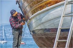 we are preparing for summer ... man at work ...  ( 1 ) (miriam ulivi) Tags: miriamulivi nikond7200 italia liguria sestrilevante uomoallavoro manatwork leudo mare sea imbarcazioni boats baiadellefavole litorale coast streetphotography stphotographia