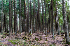 BBI_5370 (pavelkalin) Tags: forest spring canon 1dx markii 2470mmii tree