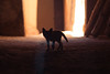 Orphan kitten in Ouarzazate (Merinorus) Tags: ouarzazate drâatafilalet maroc ma silhouette dawn dark toned image monochrome shadow sun sepia backlit black white kitten shadows ill illness famine orphan orange meow