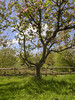 Bough Beech Oast (Gareth Christian) Tags: sonydschx90v kentwildlifetrust boughbeech kwt orchard apple blossom oasthouse oast nature tree appletree