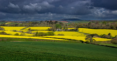Germanic spring (snowyturner) Tags: rapeseed canola spring hills cornwall stgermans agriculture colours inspirational eos vivid couleurs lighting drama yellow hayfever dark moody storm camera lens 1855mm rainclouds floral photograph artistic art beautiful gorgeous sky trees treescape april england english mast distance grass hedges house focalpoint curves lightroom gimp