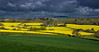 Germanic spring (snowyturner) Tags: rapeseed canola spring hills cornwall stgermans agriculture