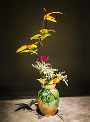 Flowery Language (Ikebana) (Astroredg) Tags: flowers fleurs vase stilllife naturemorte zen orange yellow montrealsbotanicalgsrden jardinbotaniquedemontréal japanese japonais ikebana kadō minimalist minimaliste photographia