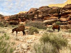 Havasupai, AZ (- Adam Reeder -) Tags: havasupai arizona az falls canyon hike outdoors outdoor outside river sandstone rock indian native american northamerica
