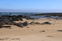 St Combs Beach_may 18_635 (Alan Longmuir.) Tags: stcombsbeach grampian aberdeenshire stcombs