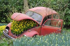 Lisse (Pays-Bas) : parc de Keukenhof (bernarddelefosse) Tags: keukenhof lisse paysbas parc fleurs