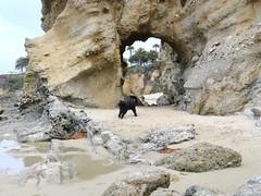 Zoomies through the Keyhole (Bennilover) Tags: southlaguna beach rocks bluff keyholeattreasureisland keyhole dog dogs labradoodle black benni zoomies fun