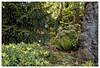 Le jardinier (Jean-Marie Lison) Tags: eos80d jardin arbres plantes fleurs fougères louvain leuven belgique